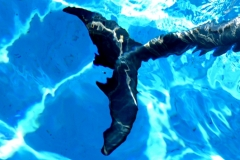 Dolphin_3466