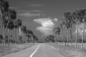 Everglades, FL - Black and White